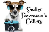 shutter pawcassos gallery fido to go