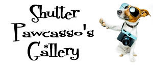 shutter pawcasso gallery title